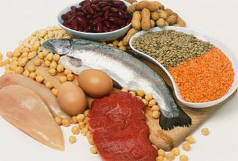 البروتين و بناء الأجسام